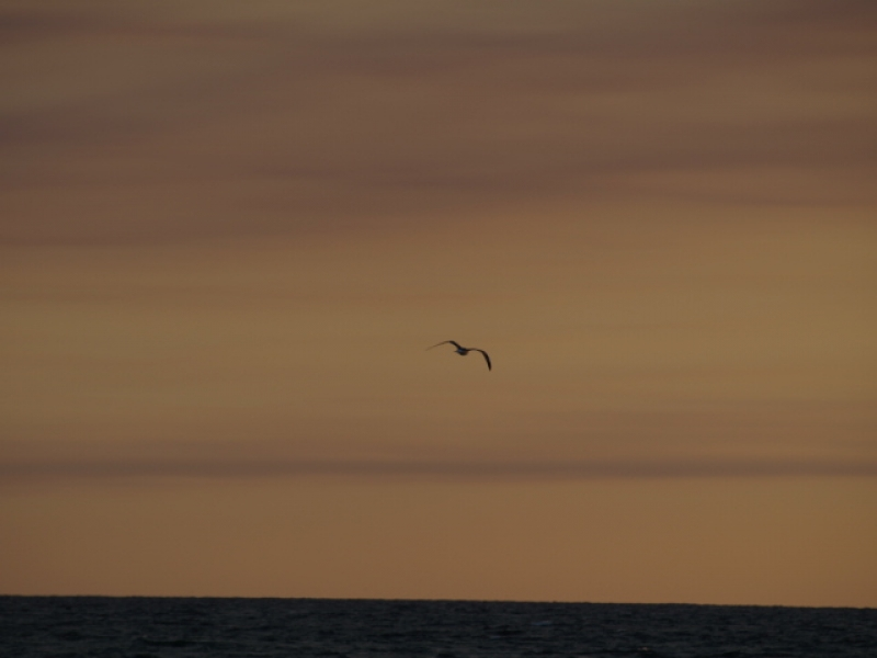 Bird Flying Over The Water At Dusk