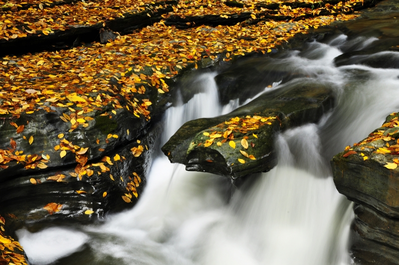 Golden Leaves Of Watkins Glen Falls