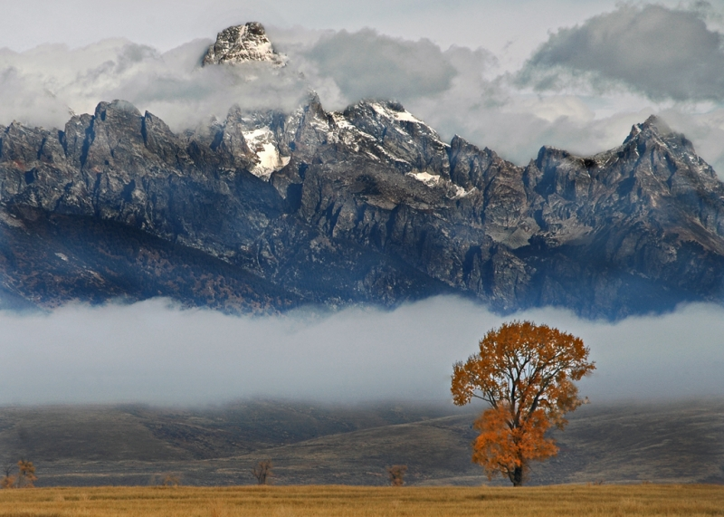 Grand Teton With Fog And Tree