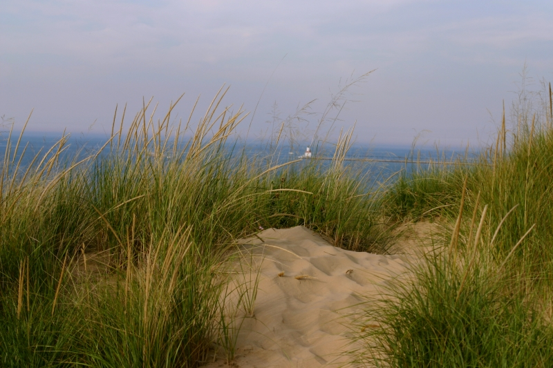 From The Sand Dune