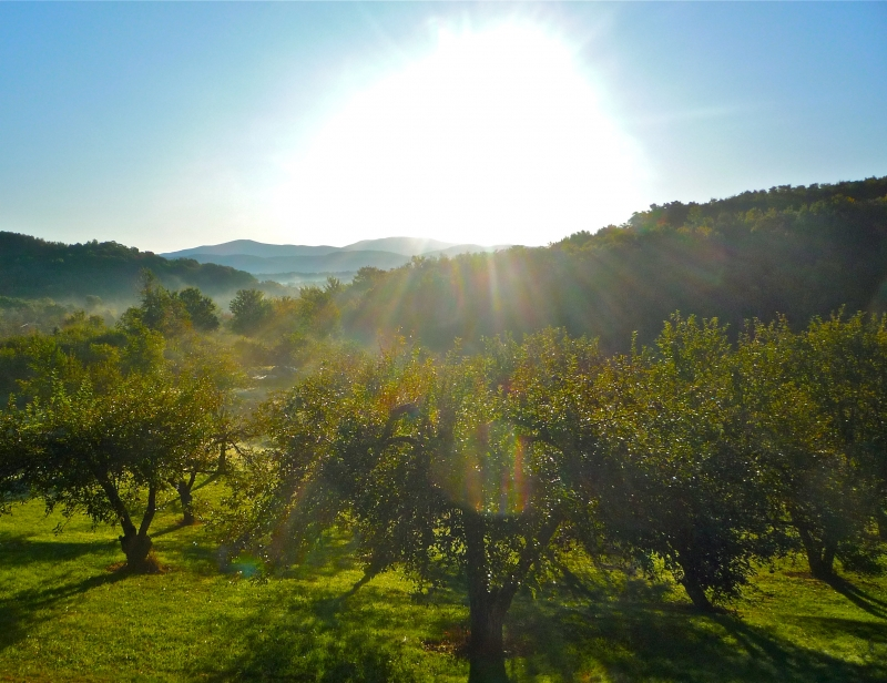 Sunrise Over The Orchard