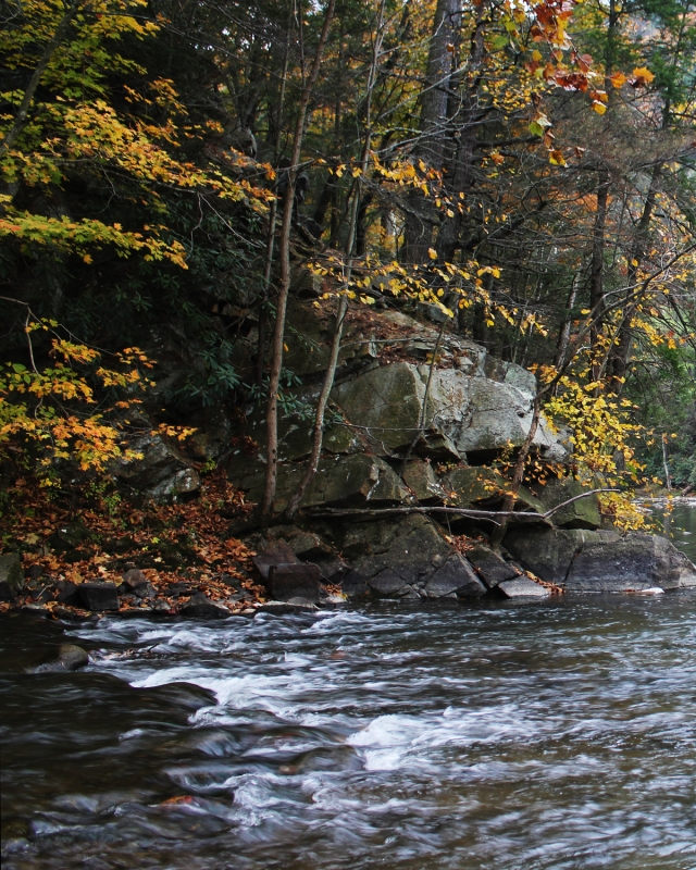 Fall Foliage Along Penns Creek