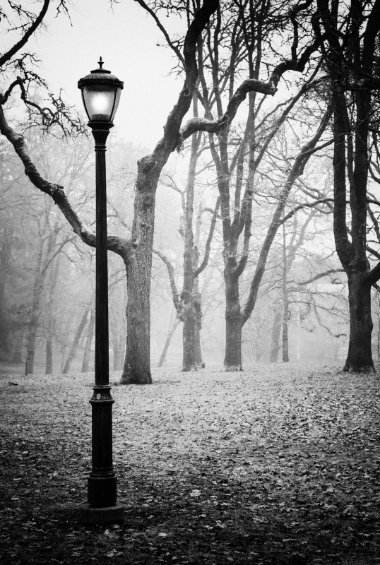 Lamp Post And Fog