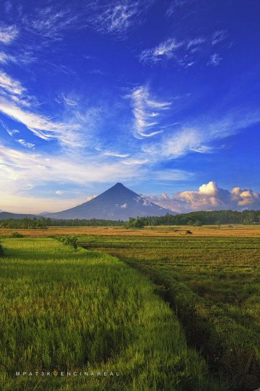 Mayon Fields