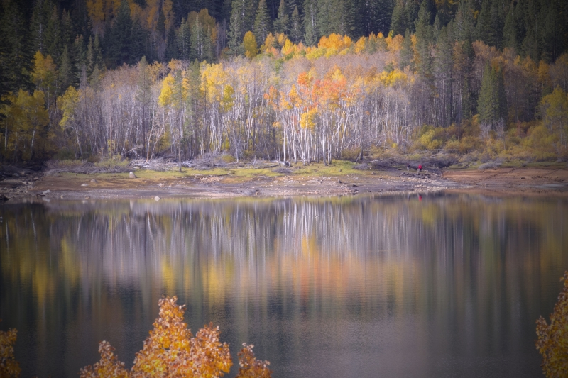 Aspens At The End Of The Lake