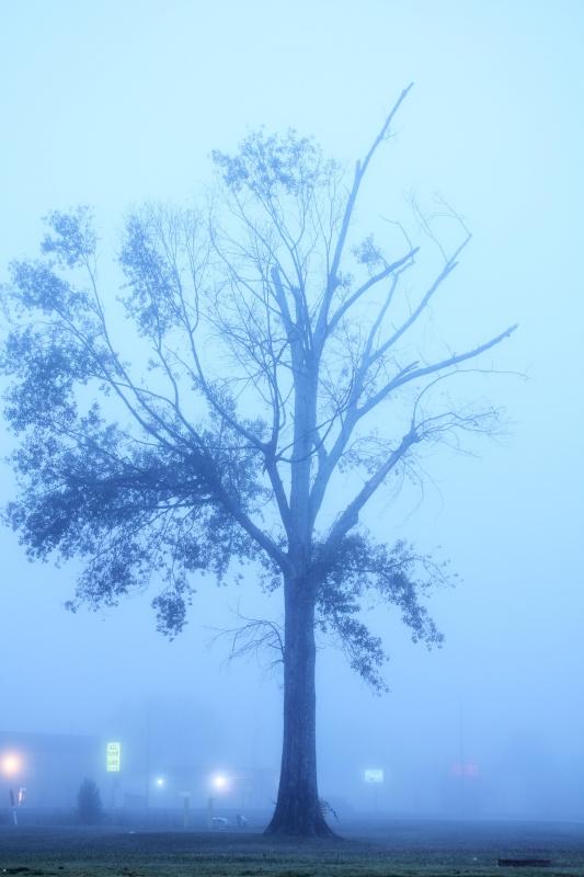 Tree In The Mist (8308)