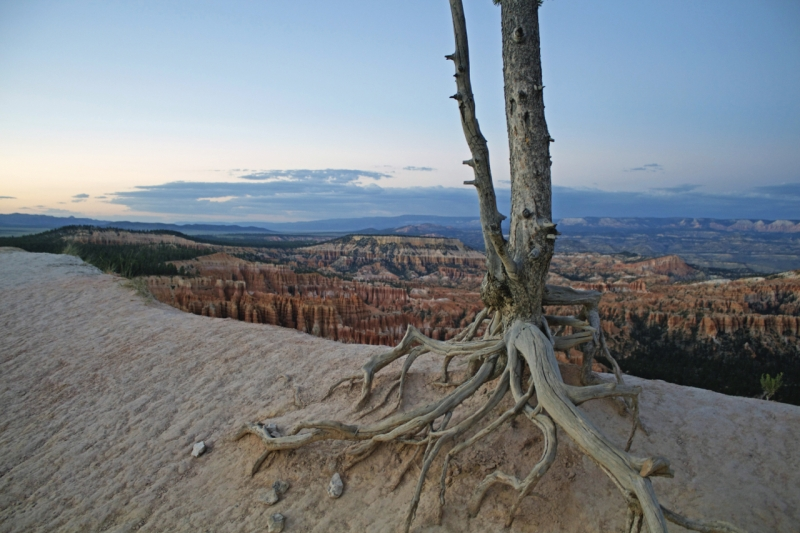 Hanging On For Dear Life At Bryce Canyon