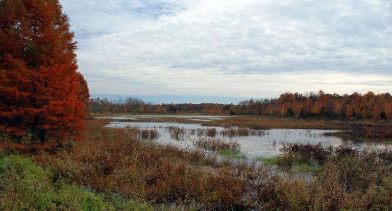 Fall Wetlands