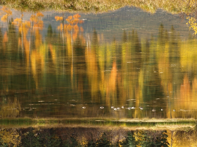 Colorado Fall Abstract