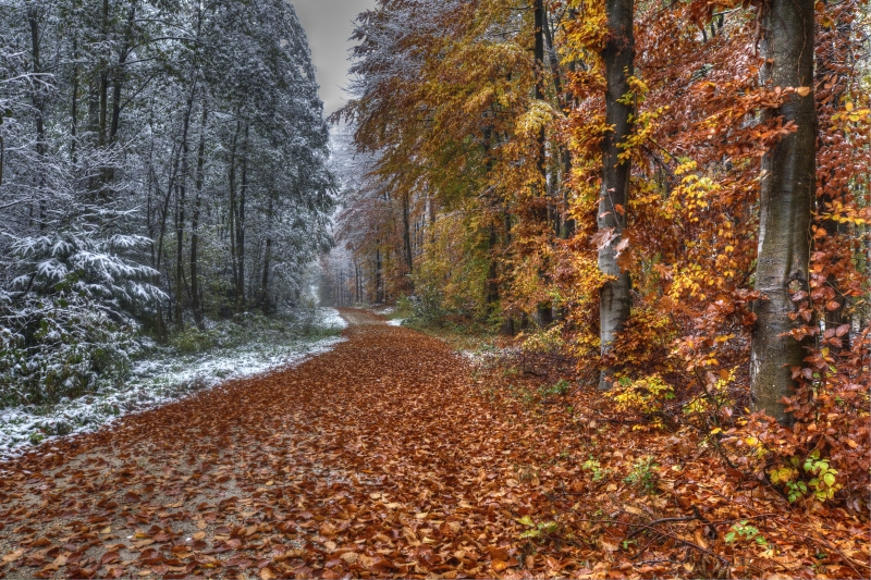 Snowy Autumn Backroads