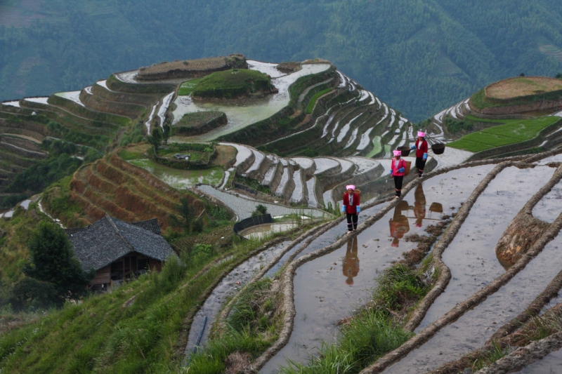 Chinese Rice Terrace Workers