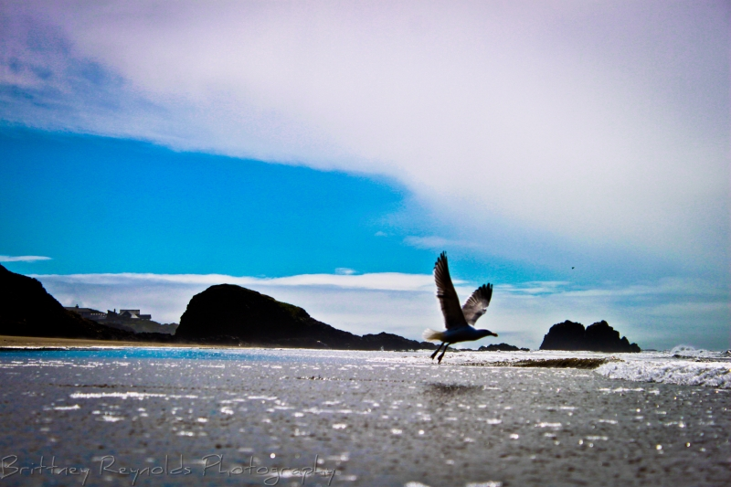 Lonely Seagull Takes Flight