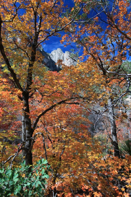 Guadalupe Mountain Fall Colors