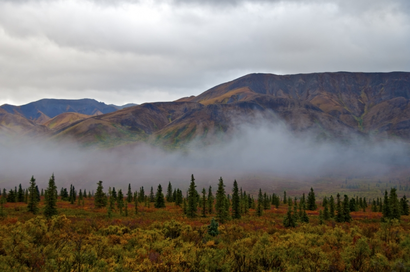 Misty Morning In Denali