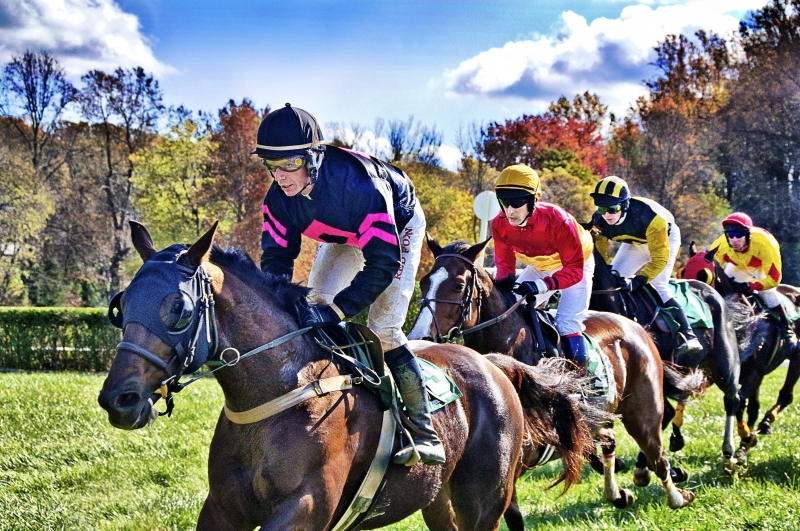 Montpelier Hunt Races 2010