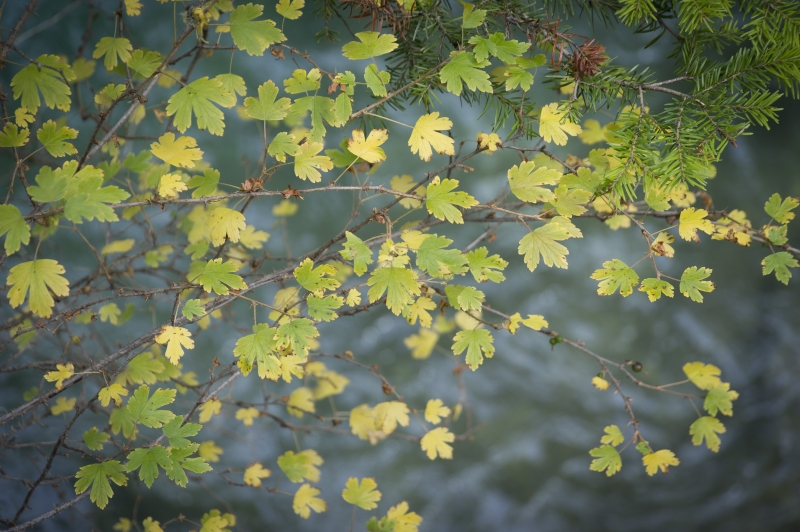 Twinkling Leaves