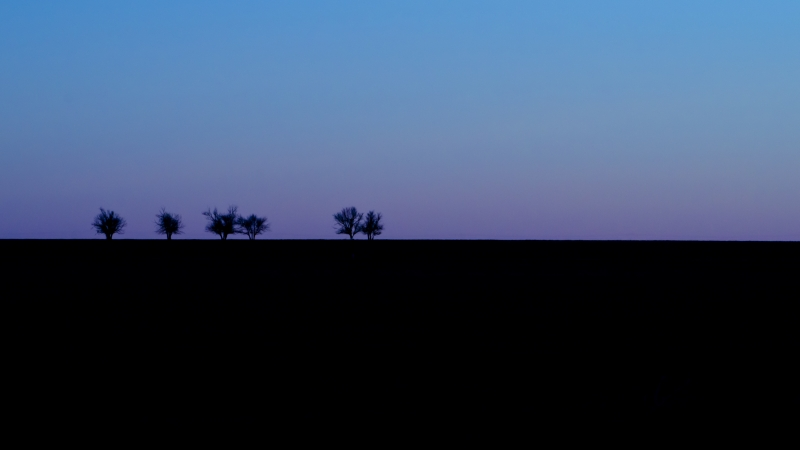 Six Trees Dawn