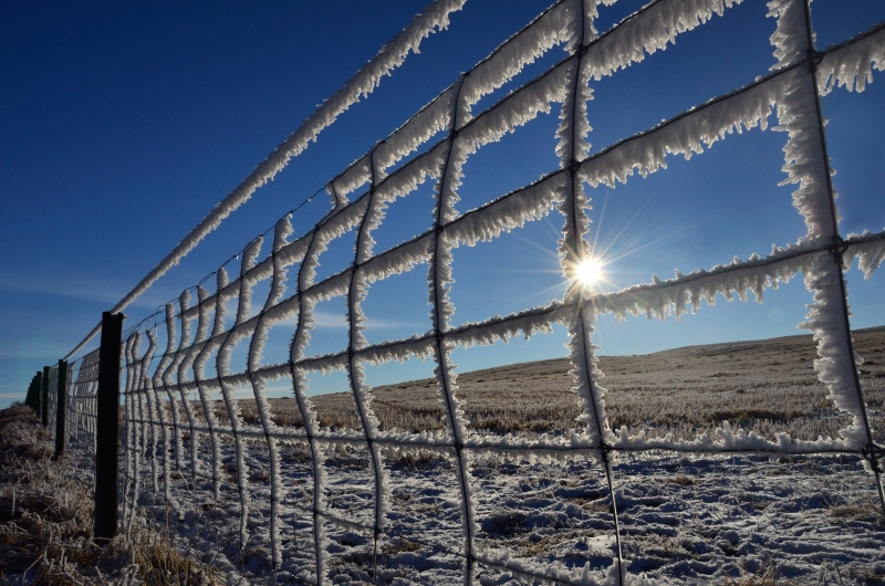 Fence Frosting