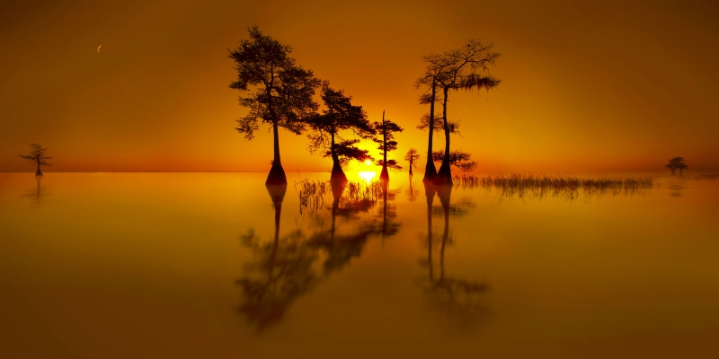 Cypress Sunrise