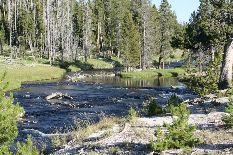 Stream In Yellowstone