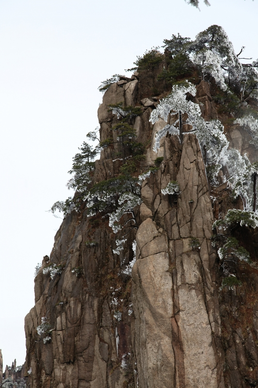 Huangshan Pinnacle With Pines Laced With Snow