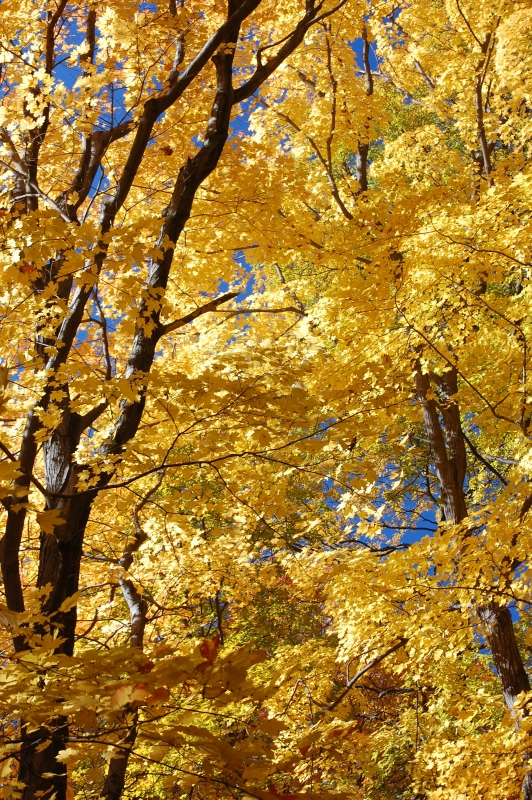 Yellow Fall Ii