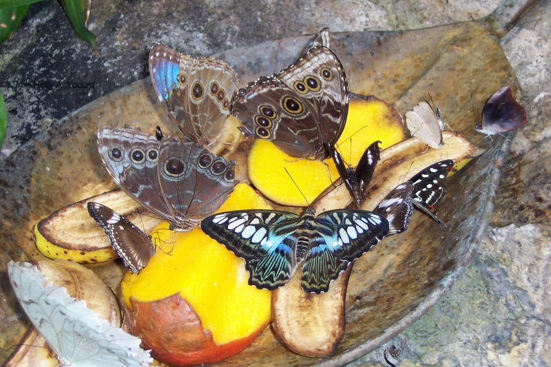 The Beauty Of Nature- Butterflies On A Plate