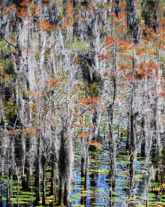 Fall In The Cypress Grove Swamp