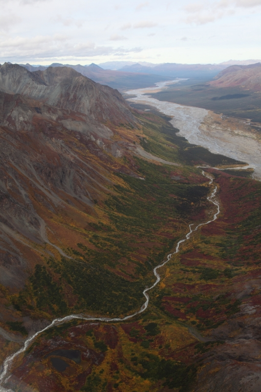 Denali Fall Colors