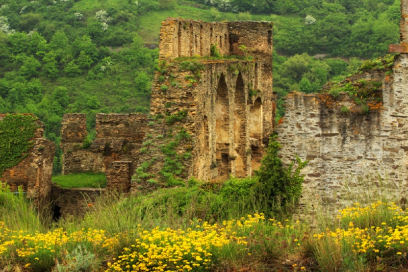 Yellow Wildflowers And Castle Ruins