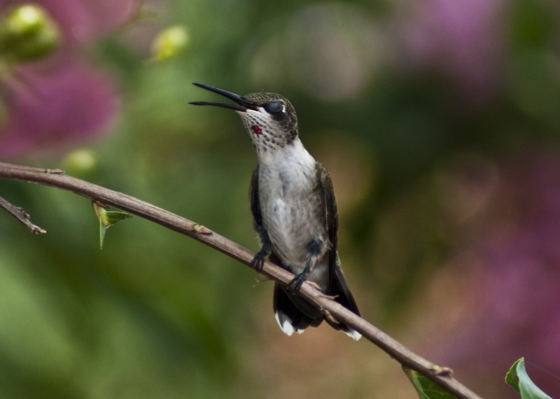 The Hummer Sings