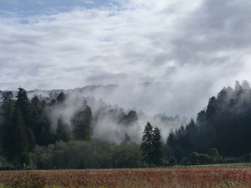 Mist Of The Redwoods