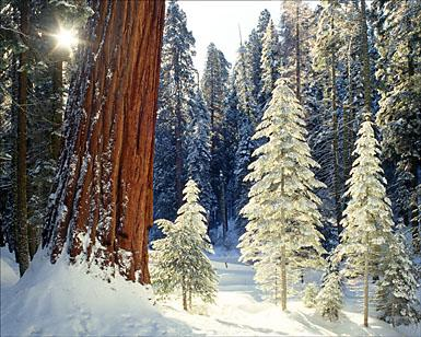 Giant Forest, Sequoia National Park