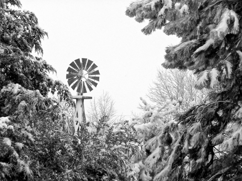 Windmill In Pine
