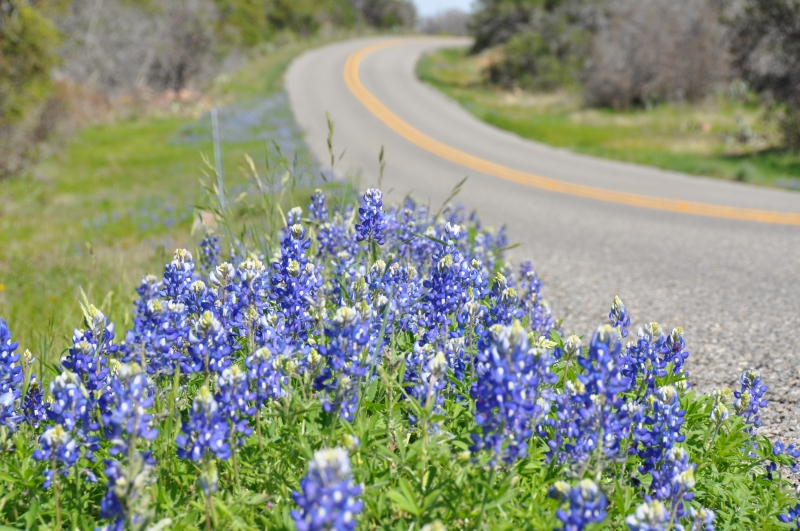 The Blue Bonnet Trail