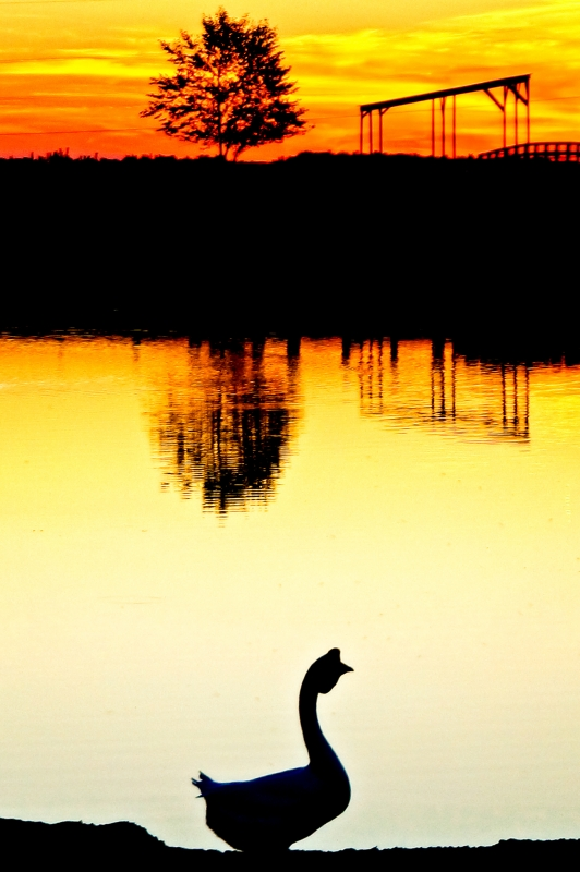 A Silhouette Of A Goose At Sunset