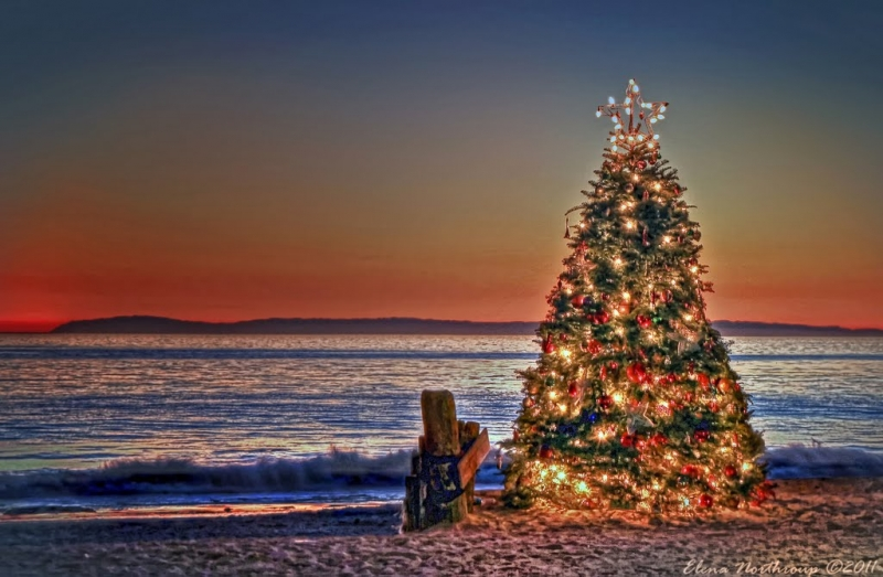 Catalina Island And Christmas Tree