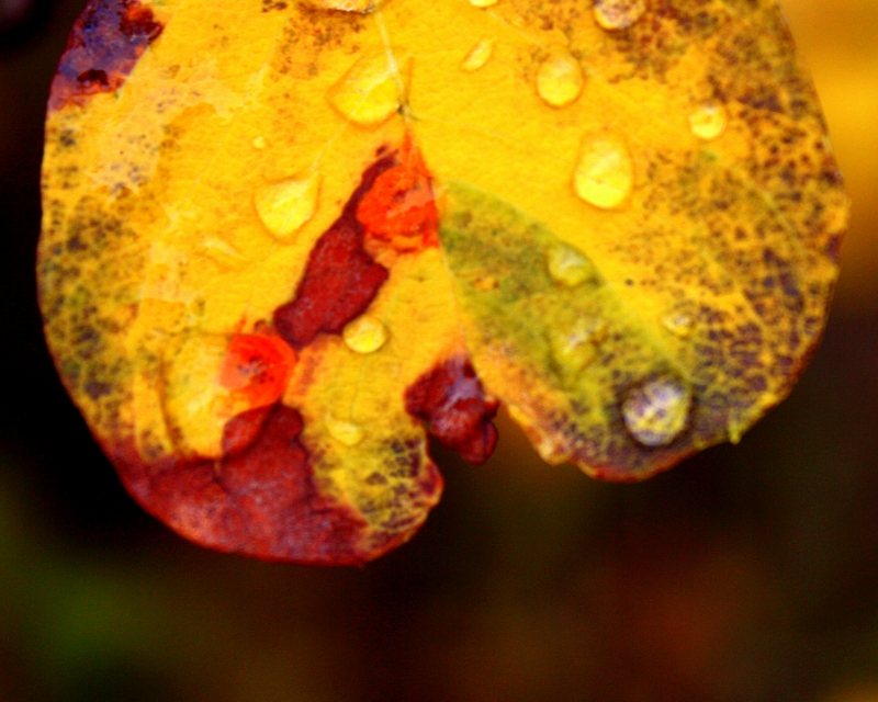 Fall Colors And Raindrops