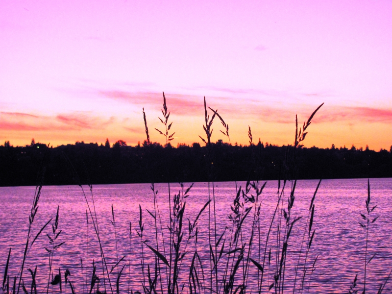 Greenlake In Pink