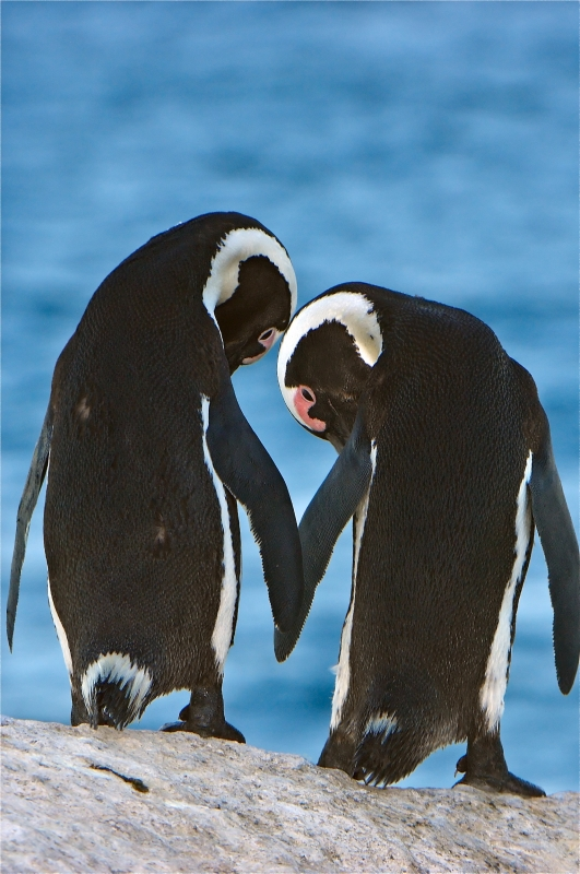 Penguin Partners