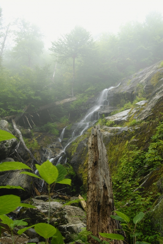 Crabtree Falls And Fog
