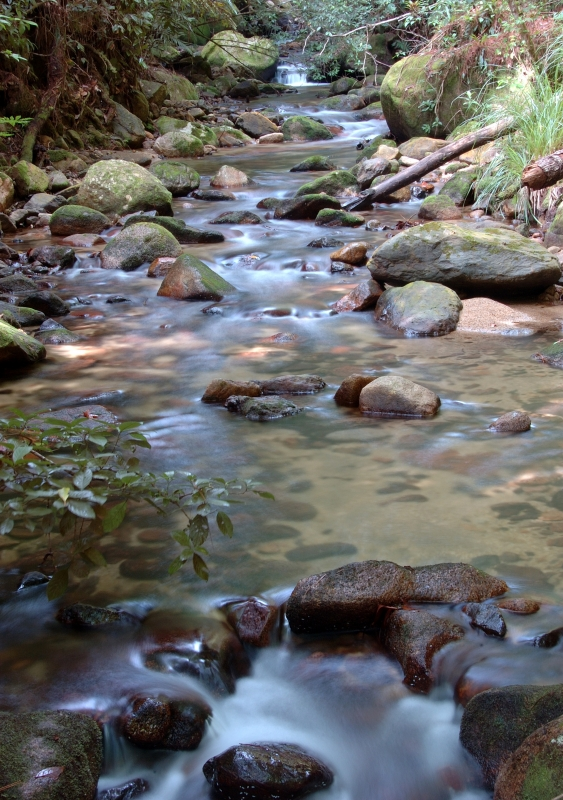 Honduran Rainforest Stream