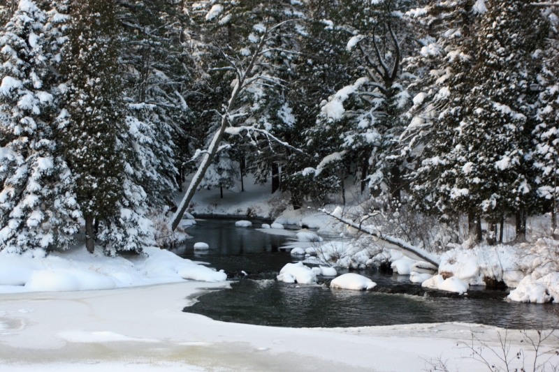 Winter View Of Carp River