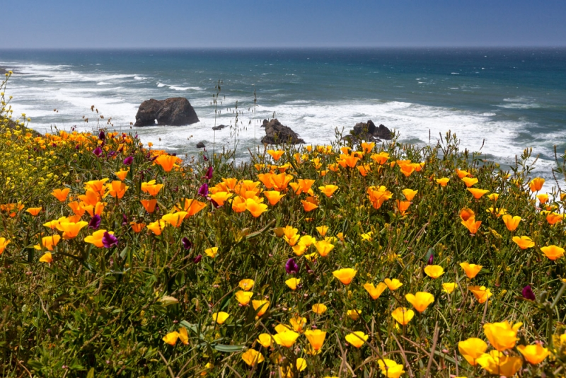 Poppies And Seascape