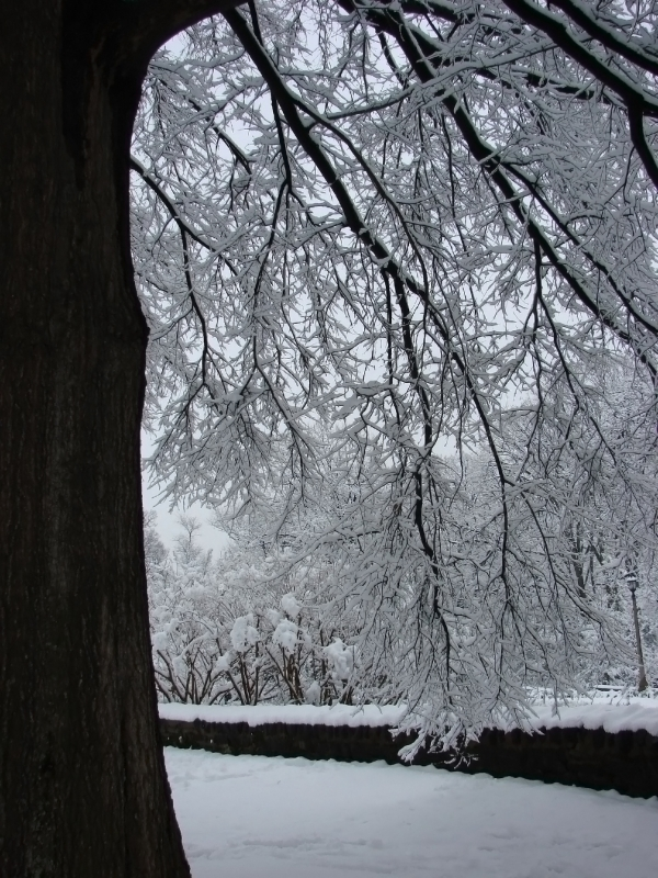 View Below Snow Covered Branches