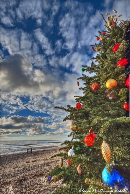 Christmas At Crystal Cove State Park, California