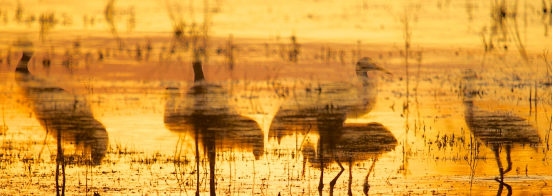 Crane Petroglyph Reflection