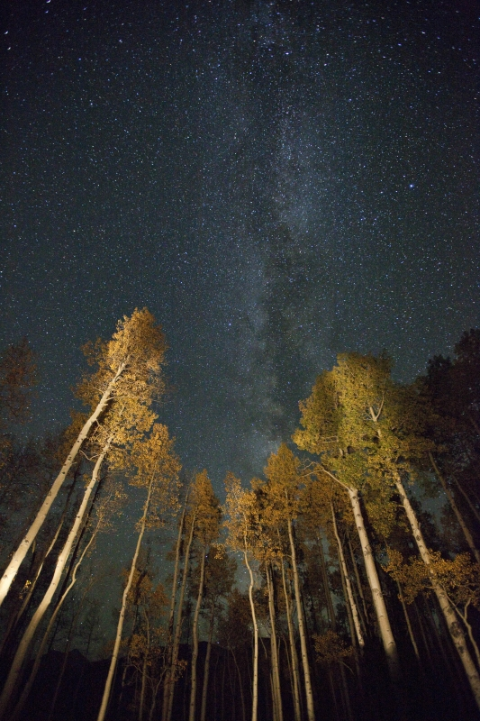 Aspens And The Milky Way