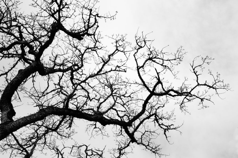 The Branches Above