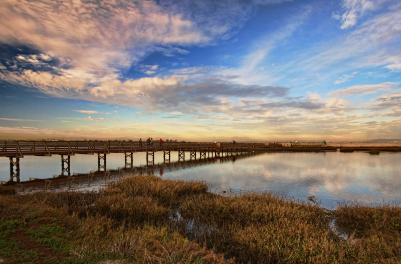 Photographers At Bolsa Chica Wetlands